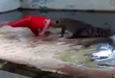 Clip: Chui đầu vào miệng cá sấu, người đàn ông nhận cái kết cực đắng