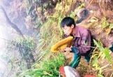 """Mùa """"mật đọng"""" giữa rừng Hương Sơn"""