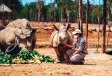 """Giữa """"tâm bão"""" dịch Covid-19, Vinpearl Safari chào đón bé tê giác mới chào đời với cái tên """"Chiến thắng""""."""