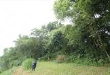 Hà Tĩnh: Phá hàng cây lâu năm ven bãi bồi làm kè chống sạt lở 48 tỉ?