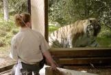 Mỹ phát hiện sư tử ho khan, hổ nhiễm Covid-19