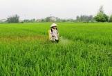 Bao giờ nông dân Hà Tĩnh chịu thay đổi thói quen trong canh tác?