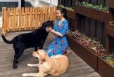 Loạt ảnh mới về biệt thự của vợ chồng Tăng Thanh Hà: Từng ngóc ngách đẹp tựa tranh vẽ, sang trọng và đẳng cấp