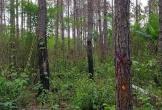 Phát hiện người đàn ông chết giữa rừng, nghi bị trúng đạn