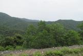Hương Khê - Hà Tĩnh: Dân tố chính quyền sai phạm về quản lí đất rừng ở xã Phú Gia