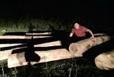 Hà Tĩnh: Phát hiện số lượng gỗ lớn tập kết gần bìa rừng