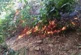 Hà Tĩnh: Mở đường băng, khống chế lửa bùng phát trở lại ở khu vực rừng Khe Tràm