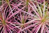4 loại cây cảnh trồng vừa làm đẹp nhà vừa có thể giảm dị ứng từ chất độc có trong không khí