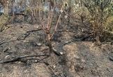 Khung cảnh hoang tàn đến xót xa của núi Mồng Gà sau vụ cháy