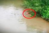 Hà Tĩnh: Hai anh em ruột cùng lao xuống sông cứu người phụ nữ nhảy cầu