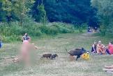 Người đàn ông khỏa thân chạy tức tưởi đuổi theo chú lợn rừng trộm laptop