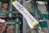 Trung Quốc phát hiện virus corona trên bao bì tôm nhập khẩu