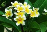 Những loài hoa tuy đẹp nhưng được quan niệm là ảnh hưởng cực xấu đến phong thủy