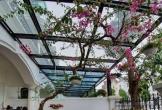 Ngắm cây cảnh quý trong biệt thự triệu đô của Tuấn Hưng