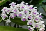 7 loại hoa tuyệt đối không bày trên ban thờ ngày Tết kẻo mất lộc