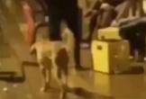 Người đàn ông bị 'nghiệp quật' khi đá chó