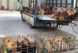 Hà Tĩnh: Công an thông báo tìm chủ sở hữu hơn 100 con chó bị mất trộm