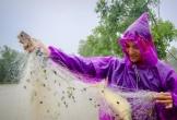 Ảnh: Nước dâng nhanh, người dân Hà Tĩnh giăng lưới bắt cá giữa đường