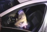 Nữ sinh đi qua đêm với thầy giáo, được phát hiện tử vong trong ô tô có đốt than
