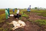 Tái xuất hiện dịch tả lợn Châu Phi tại Hà Tĩnh