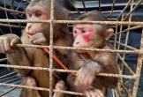 Vườn Quốc gia Vũ Quang cứu hộ khỉ mặt đỏ và trăn đất