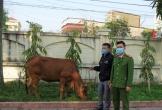 Thuê hẳn xe tải từ Nghệ An sang Hà Tĩnh để trộm con bò cái