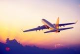 Phi công phải bay vòng 20 phút trên trời để chờ... đuổi chó