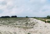 Dự án trồng rau trên cát ở Hà Tĩnh thua lỗ triền miền