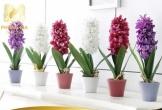 Đẹp đến mấy cũng không đặt cây, hoa kiểu này tránh xui xẻo, rước bệnh cho gia đình