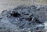 Clip: Người đàn ông say xỉn rơi xuống đầm lầy rồi ngủ luôn tới sáng khiến người dân 'hết hồn'