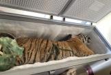 Hà Tĩnh: Phát hiện xác hổ 160 kg trong tủ đông lạnh ở nhà dân