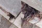 Thấy 'vật thể lạ' thò ra từ vết nứt ngôi mộ, người đàn ông bị dọa sợ 'dựng tóc gáy'