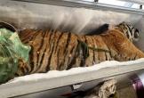 Video: Phát hiện xác hổ đông lạnh nặng 160kg tại nhà dân ở Hà Tĩnh