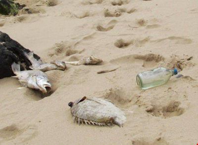 Sự cố môi trường biển xảy ra đã lâu nhưng dường như các cá nhân, tổ chức ở Hà Tĩnh còn lạ lẫm với việc tự nhận hình thức kiểm điểm